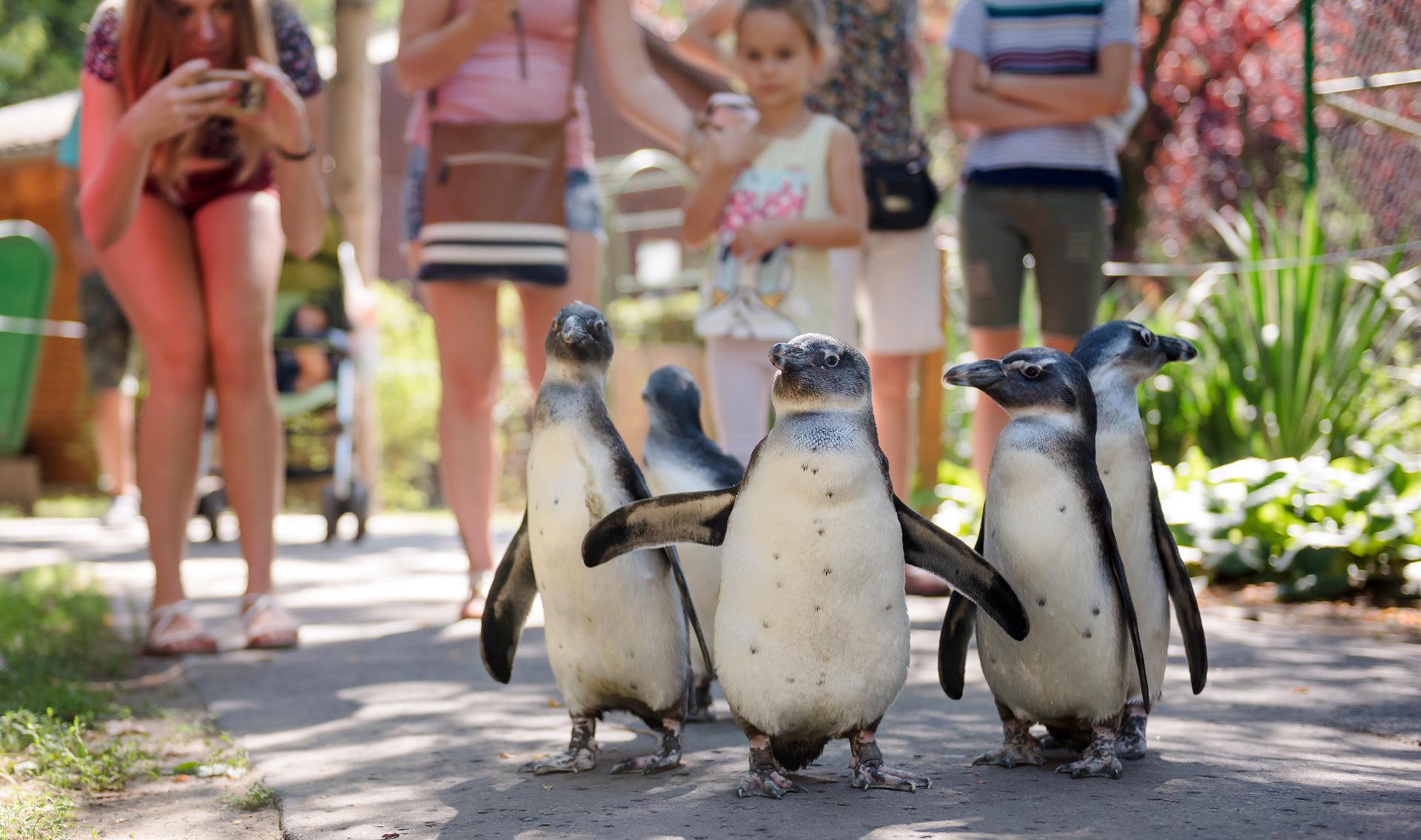 Grădină zoologică